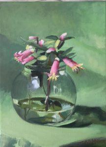Correa reflexa, oil on linen, 26 5 x 20 5cm (incl frame)
