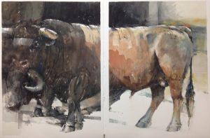 2 bulls dyptich watercolour on paper 112 x 76cm