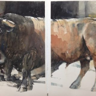 2 bulls dyptich watercolour on paper 112 x 76cm