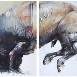 Bull dyptich watercolour on paper 112 x 56cm