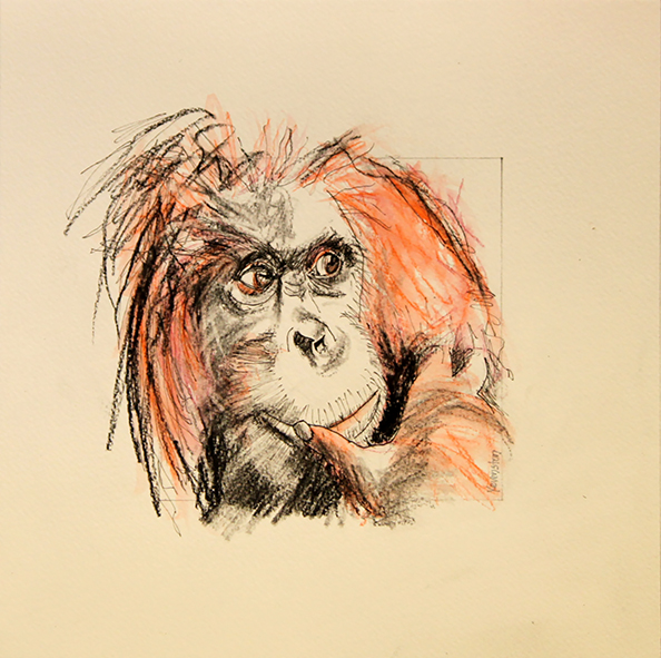 Orangutan drawing #1 ink, watercolour pencil and charcoal on paper, 25 5 x 25 5cm