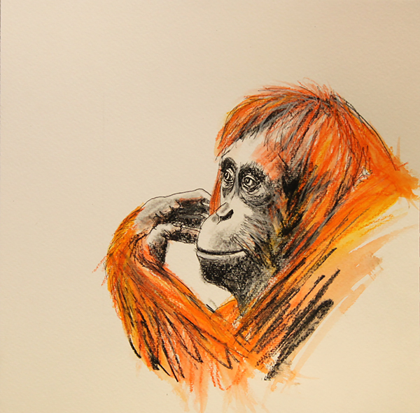Orangutan drawing #2 ink, watercolour pencil and charcoal on paper, 25 5 x 25 5cm