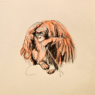 Orangutan drawing #5 ink, watercolour pencil and charcoal on paper, 25 5 x 25 5cm