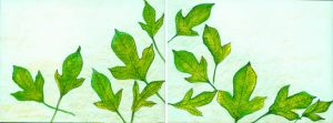 Green leaves 4 pastel on paper 25 x 9in