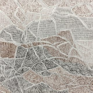 Bouddi undergrowth ink on paper, 21 x 30cm
