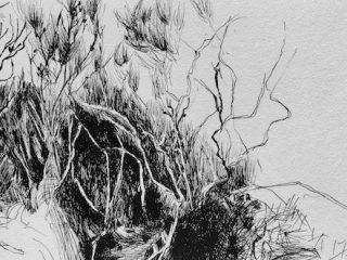 Coastal scrub ink on paper, 22 x 33cm