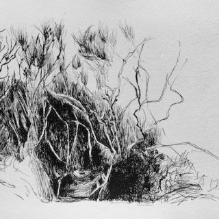Coastal scrub ink on paper, 22 x 33cm