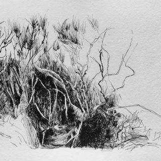 Coastal Scrub, ink on paper, 22 x 33cm