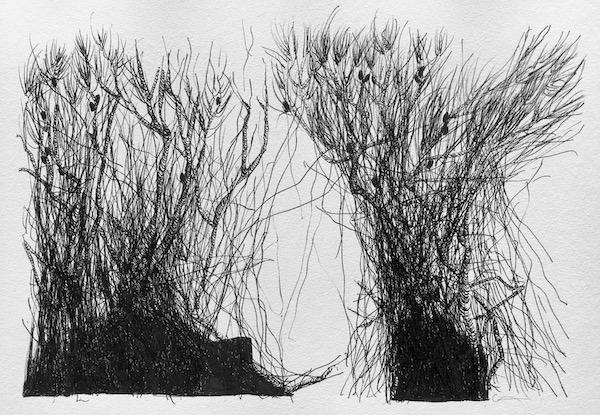 In between ink on paper, 24 x 36cm