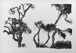 Trees ink on paper, 23 x 34cm