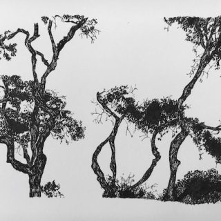 Trees, ink on paper, 23 x 34cm