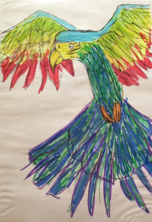 Rainbow Parrot by lily-Mae Chee, artlinepen marker on tracing paper, 21 x 29cm copy
