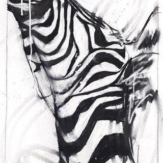Zebra I, mixed media on canvas, 65 x 48cm